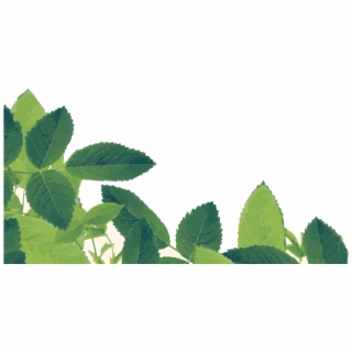Herbs PNG Images   Herbs Transparent PNG - Vippng