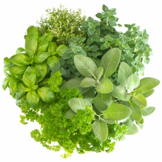 Herbs PNG Images | Herbs Transparent PNG - Vippng
