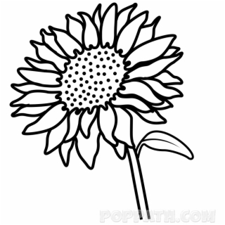 Flower Drawing Png Images Flower Drawing Transparent Png
