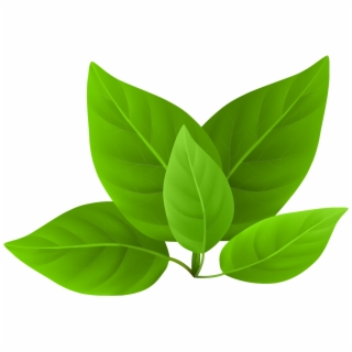 Spinach Leaf Png Clipart Leaves Green Tea Leaf Green Tea Leaf Png 2870840 Vippng
